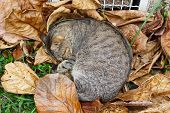 Homeless Cat Sleeping On Autumn Leaves Near Heating Grille