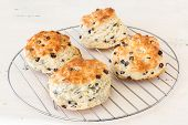 Freshly baked homemade biscuits with raisins cooling on a wire rack.