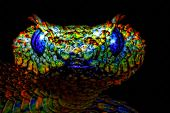 image of snake-head  - A digitally constructed painting of a colourful snakes head - JPG