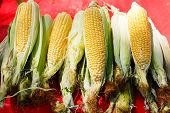 picture of farmer  - Organic fresh corn from mediterranean farmers market - JPG