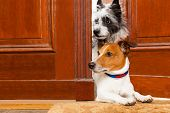 picture of dog-walker  - couple of dogs watching and looking at the door at home on the doormat - JPG
