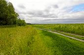 picture of dirt road  - Dirt road in the countryside along the green meadows and woods in the spring - JPG