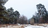 pic of dirt road  - Dirt road in the winter forest in the cloudy day - JPG