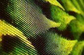pic of green snake  - LED screen SMD snake green background blur - JPG