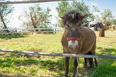 picture of pony  - The horse pony in the paddock waiting for freedom - JPG