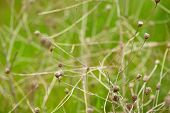 picture of dry grass  - Nature background - JPG