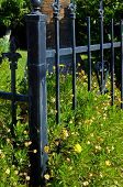 stock photo of wrought iron  - The corner of a residential wrought iron fence is surrounded by domestic flowers - JPG