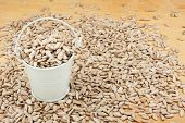 pic of bucket  - White bucket with sunflower seeds on the wooden floor as a background - JPG