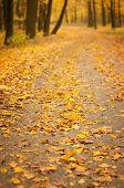 picture of kiev  - road through the autumn park in Kiev - JPG