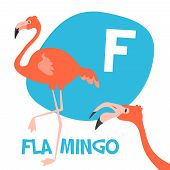 picture of flamingo  - Funny cartoon animals vector alphabet letter for kids from A to Z - JPG