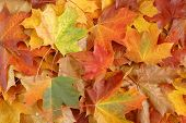 image of fall leaves  - autumn leaves - JPG
