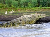 6M-Long Crocodile, Lake Chamo, Ethiopia