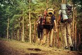 Adventure and hiking. Group of young people make a hike in mountains. Active lifestyle. Tourist equi poster