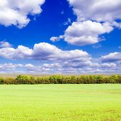Autumn field and white clouds on a background of the sky