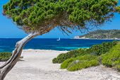 Seascape With A Tree And A Sailboat In The Background (ibiza, Spain) poster