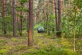 Grey Car In Beautiful Green Pine Forest poster