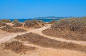 Natural Coastal Summer Landscape With Criss-crossing Dirt Paths Dry Herbs And Crystal Blue Ocean. poster