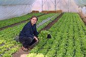 Greenhouse Vegetable Grower