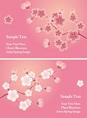 Cherry blossom cards set. Illustration vector.