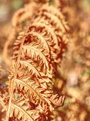 Dry Orange Stalk Of Fern. Extreme Hot In Forest Without Any Rain. Extreme Weather. poster