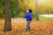 Pretty Boy Gathers A Golden Fall Leaf On Background Of Colorful Autumnal Landscape. Charming Child C poster