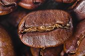grain of coffee by CU on a background coffee grains