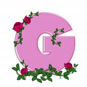 pic of climbing roses  - The letter G in the alphabet set Blushing Roses is soft pink - JPG