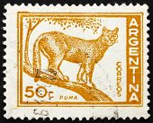 Postage stamp Argentina 1960 Puma, Cougar