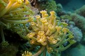 coral reef with yellow soft coral