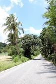 Road With Coconut Trees.