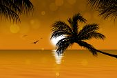 Ouro Tropical Sunset