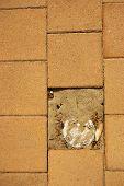 Brick Floor With A Broken Brick