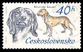 Czechoslovakia Stamp, Bavarian Hound