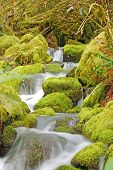 stock photo of rogue  - Small forest stream falling to the North Umpqua River Umpqua National Forest near Roseburg Oregon - JPG