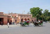 Marrakesh Horse