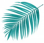 Leaf Of Palm Tree On White Background