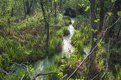 Green Swamp.