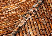 Old Shingles On The Roof