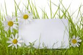 stock photo of daisy flower  - White sign amongst grass with white daisies - JPG