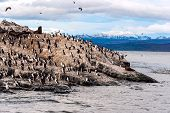 stock photo of tierra  - King Cormorant colony sits on an Island in the Beagle Channel - JPG