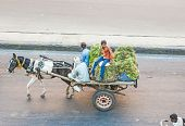 People On A Horse Cart In The Morning