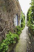 foto of english ivy  - Footpath going between old country cottages in english rural village - JPG
