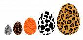 Egg Animal.