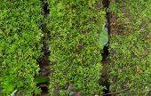 Beautiful Rain Forest At Ang Ka Nature Trail In Doi Inthanon Nation Park, Chiagn Mai, Thailand.