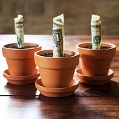 Us Dollars Planting In Flower Pots