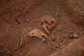 Skeleton In Grave
