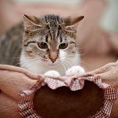 Portrait Of A Striped Modest Cat.