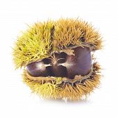 Chestnuts In Its Burr Isolated On A White Background