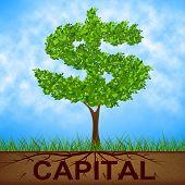 Capital Tree Indicates American Dollars And Banking