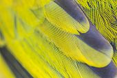 image of bulbul  - feather of Black - JPG